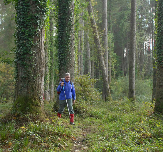 Person walking through a forest path