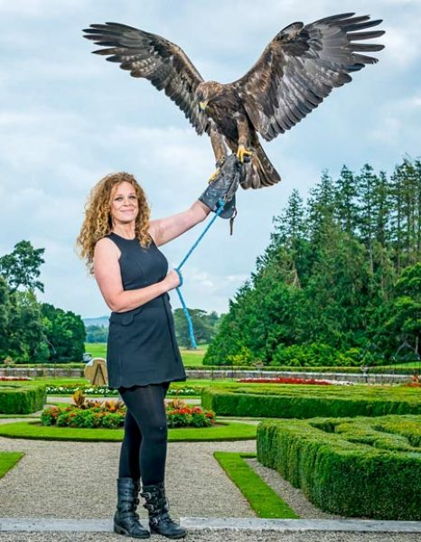 Adare Country Pursuits with Bird of Prey