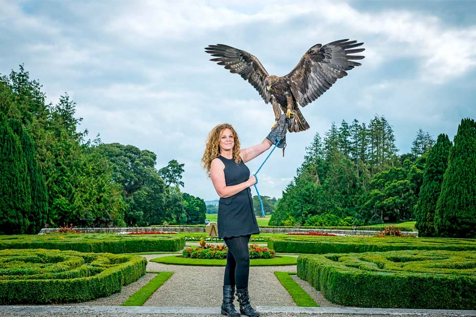 A woman is holding a bird of prey eagle on her arm at Adare Manor